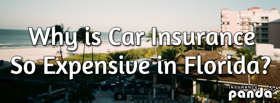 Why is Car Insurance So Expensive in Florida?