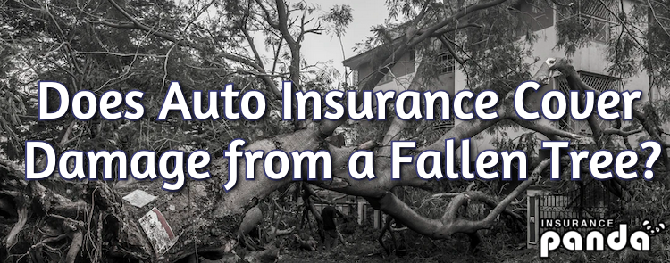 Does Auto Insurance Cover Damage from a Fallen Tree?
