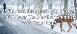 if you hit a deer or another animal, will insurance pay?