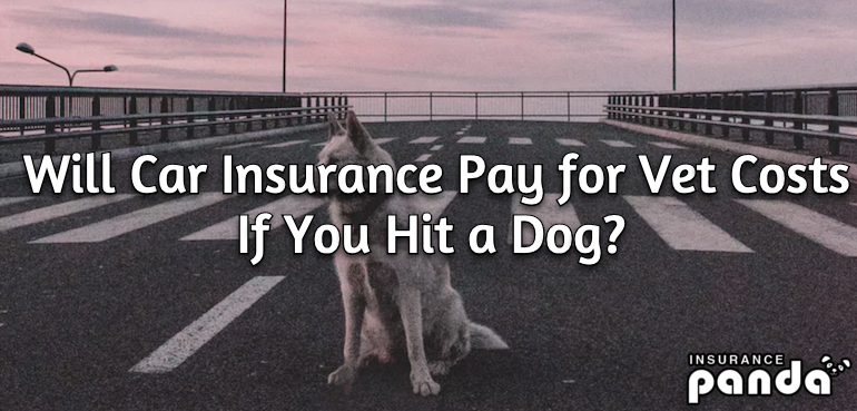 Will Car Insurance Pay for Vet Costs If You Hit a Dog?
