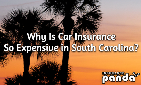 Why Is Car Insurance So Expensive in South Carolina?