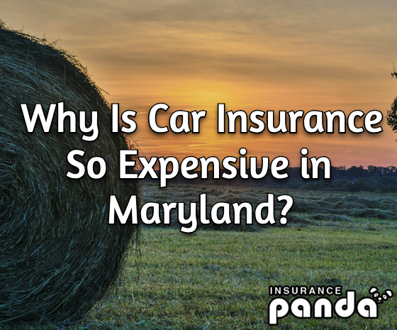 Why Is Car Insurance So Expensive in Maryland?